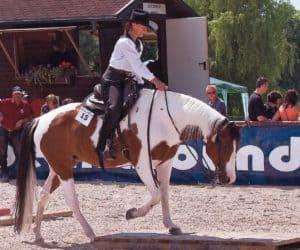 treeless saddles